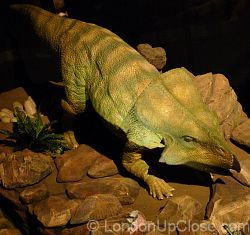 An animatronic Protoceratops (the 'sheep of the Cretaceous period') guarding its nest at the Age of the Dinosaur Exhibition, Natural History Museum
