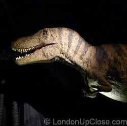 A big, scary animatronic Tarbosaurus dinosaur at the Age of the Dinosaur Exhibition, Natural History Museum