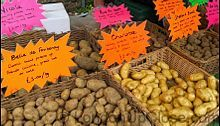 Belle de Fontenay, Pink Fir Apple, Shetland Black... a selection of unusual and heritage potato varieties on Marylebone Farmers' Market